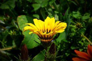 flower-1793537__340